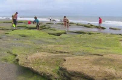 Coquina rocks at Kure Beach