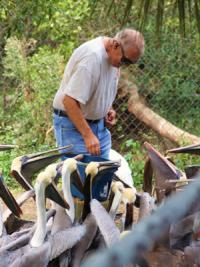 Mac Feeding Pelicans