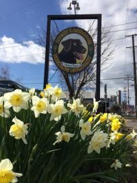 Day Trip: Seattle Southside's Dalmatian Dog Goes to Portland: Lucky Labrador Brewing Company's Hawthorne Brew Pub
