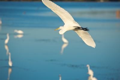 wildlife panama city beach florida