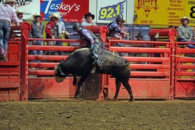 Stockyards Rodeo bull riding 1