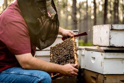 Barkman Honey