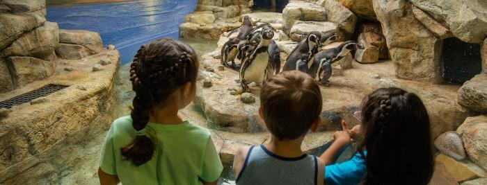 Moody Gardens Penguins