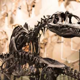 Allosaurus in Past Worlds gallery