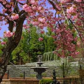 Fountain in the Spring