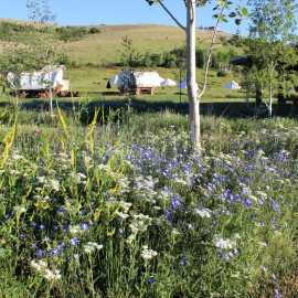 Wagons and Wildflowers