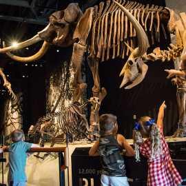 Recently extinct mammals from the pleistocene