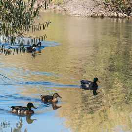 A few of the