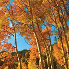 Awe Inspiring Autumn
