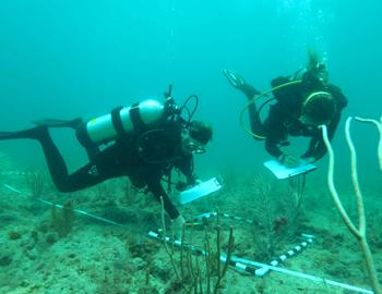 Photo of two scuba divers performing an underwater survey of the coral reef.