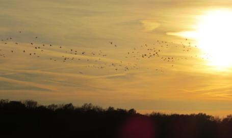 Jasper Pulaski Wildlife Area Bird Watching Sandhill Cranes