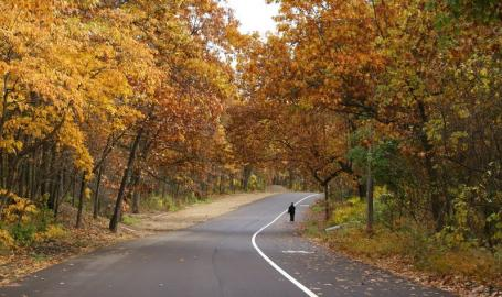 Marquette Park Fall