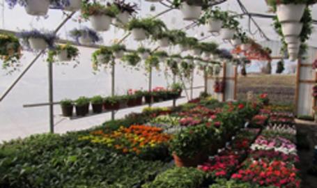 Broertje's Farms- Greenhouse