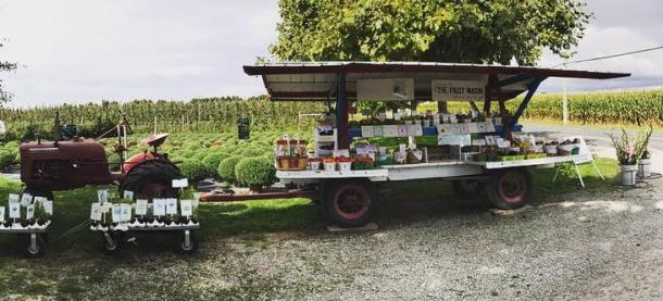 The fruit wagon