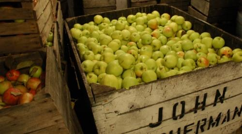 Kilcherman Apples