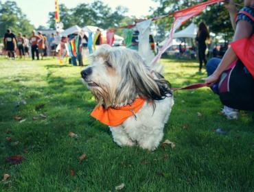 Barktober Fest 2017 For Lollypop Farm