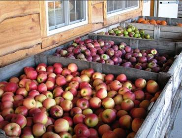 Wayne County Apple Tasting Weekend