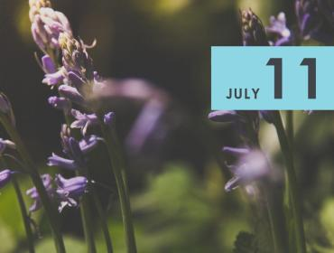 Building Your Herbal First Aid Kit For Summer