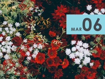 Watercolor Florals + Succulents