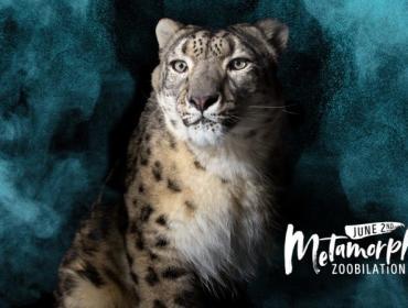 Zoobilation 2018