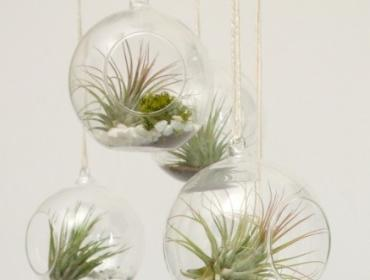 Hanging Gardens: Air Plant Terrarium Workshop