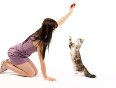 Cats 101: Reading Your Cats Behavior + Basic Training