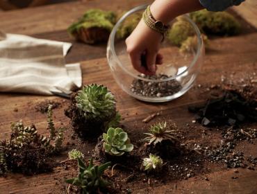 Succulent Gardens: Terrarium Workshop