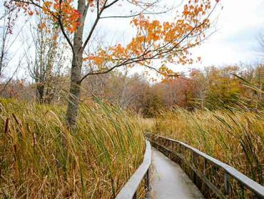 Nature Hike with Seneca Park Zoo and The Nature Conservancy
