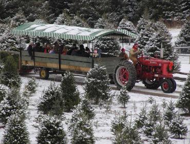 Christmas Tree Season at Stokoe Farms
