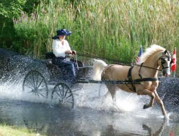 Walnut Hill Farm Carriage Driving Competition - 46th Anniversary
