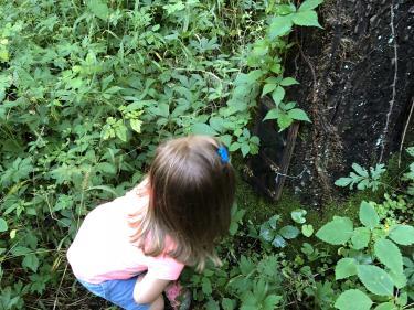 Fairy Stop at Washington Township Park
