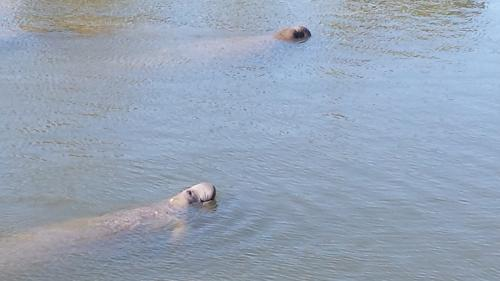 TECO Manatee Viewing Center