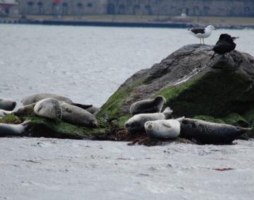 Seal Tours3