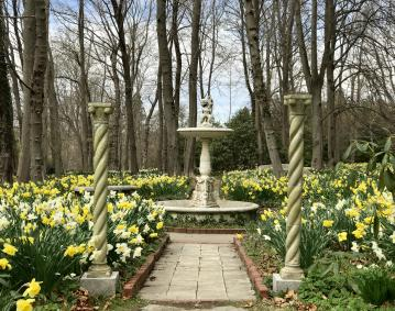 https://res.cloudinary.com/simpleview/image/upload/crm/newportri/blithewold-daffodils-_credit-Discover-Newport35_e756946c-5056-b3a8-49a824d5c2c90e8e.jpg