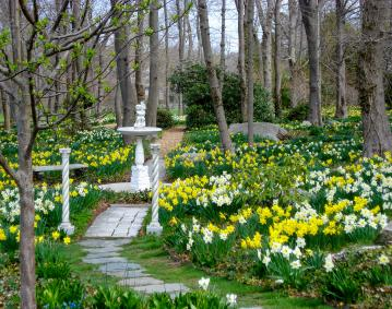 https://res.cloudinary.com/simpleview/image/upload/crm/newportri/blithewold-daffodils_credit-Blithewold2_83d6d445-5056-b3a8-49f02079974a38c6.jpg