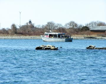 https://res.cloudinary.com/simpleview/image/upload/crm/newportri/newport-seal-tour-boat-seals_credit-Save-The-Bay6_32716e46-5056-b3a8-49949a0719264384.jpg