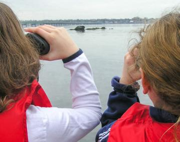 Save Bay Seals