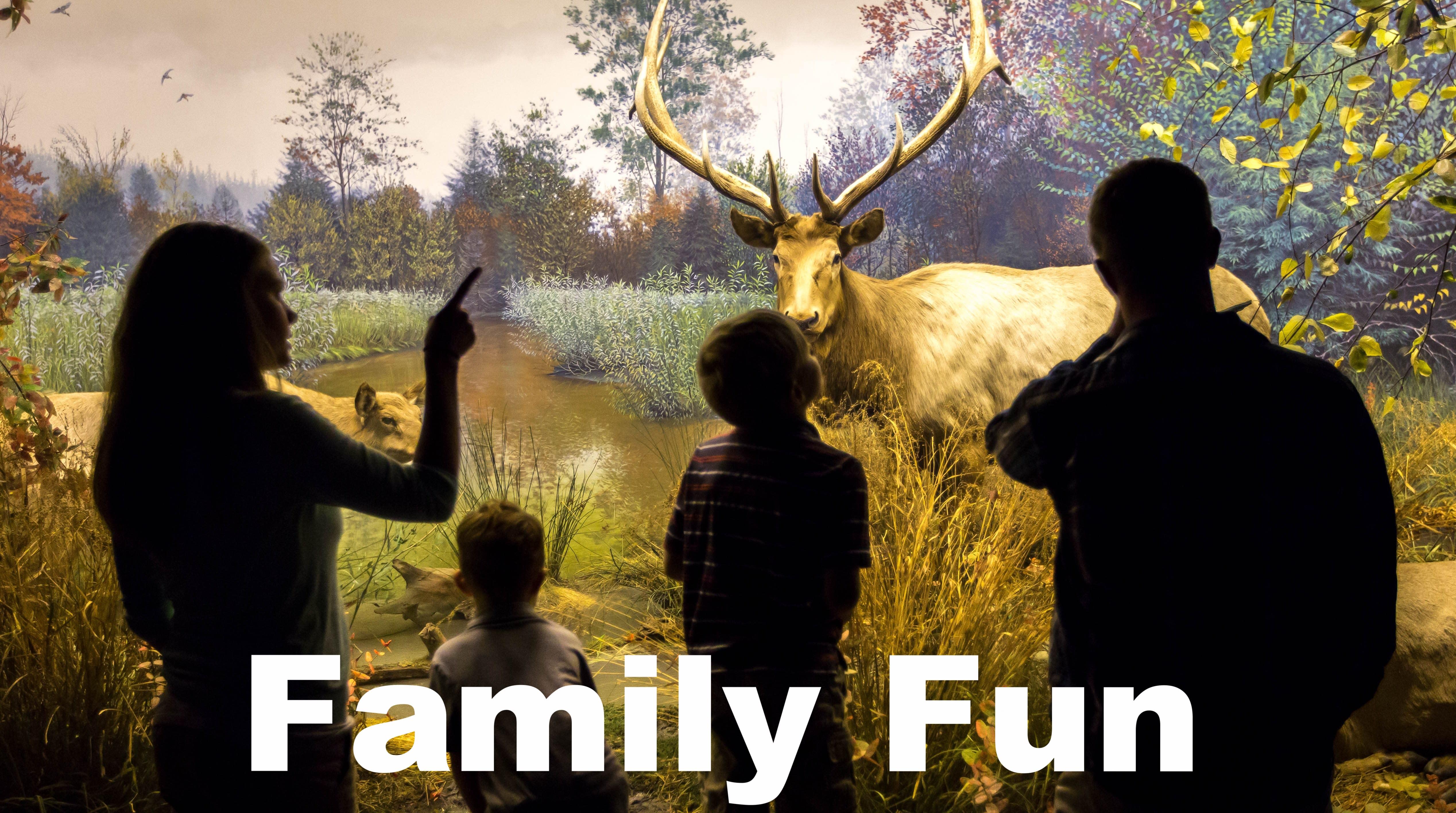 Things to do Family Fun