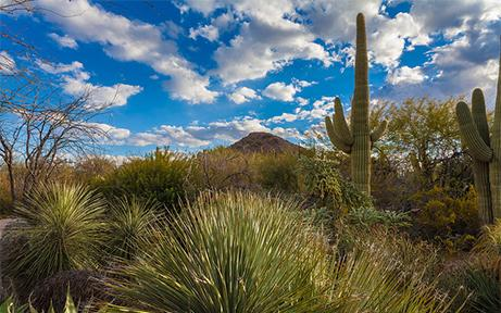 DBG Top 10 Things to see and do in Scottsdale