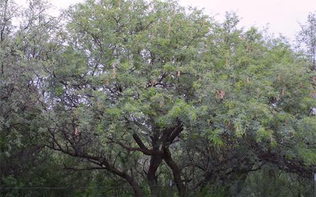 Mesquite Cacti & Critters
