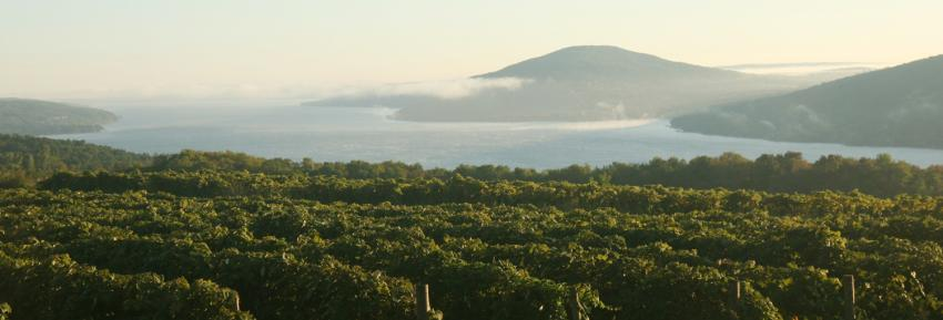 finger-lakes-canandaiugua-lake-scenic-vineyards-fog