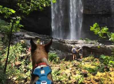 Dog Waterfall