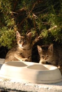 Cats with Water Bowl