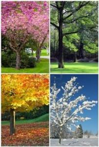 Seasons In Dayton