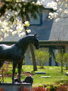 Horse Park Statue
