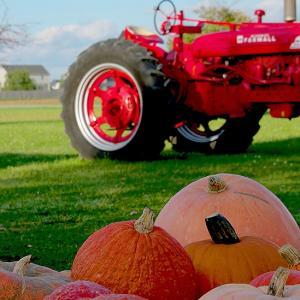 Pumpkin Picking at Farm Stand