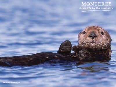 Otter Thumb