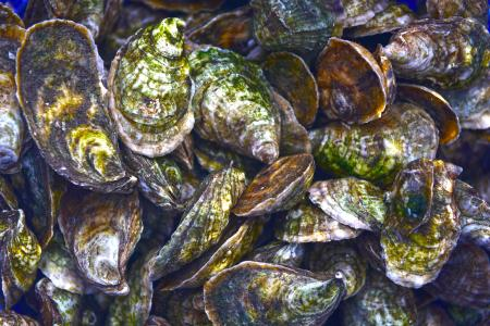 oyster up close