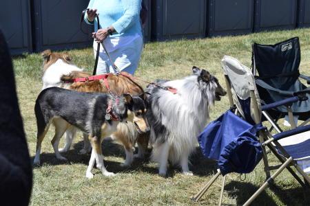 dsc0198 - dogs