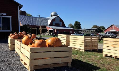 Ellms Family Farm Pumpkins